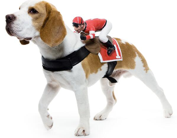 dog jockey harness costume
