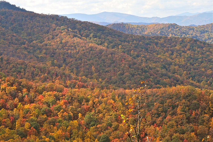 Fall Color against backdrop of blue ridge mountains