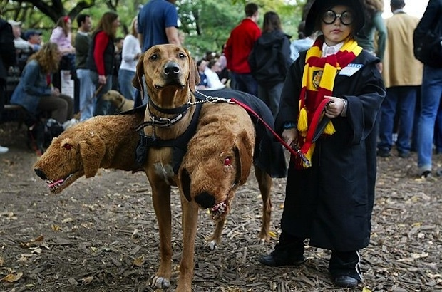 fluffy the three headed dog from harry potter