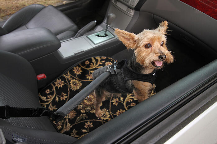 Snickers the Dog travels in Style on a GG Bailey Pet Travel Mat