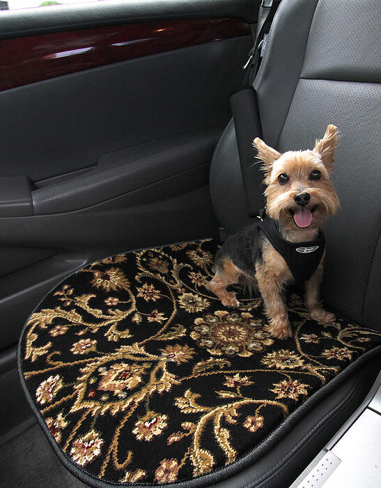 A GG Bailey Pet Travel Mat protects this car's leather interior from scratches, paw prints, and pet hair while Snickers rides along in comfort and style.