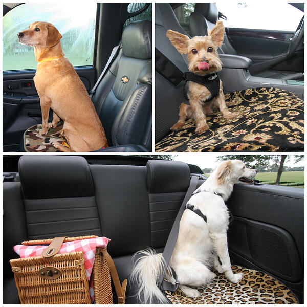 Pet Car Mats for traveling with your dog