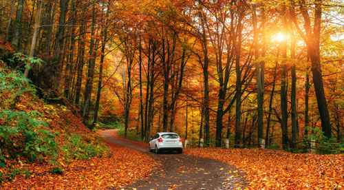 white car driving down the road with fall colored leaves and trees